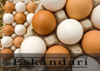 تخم مرغ غیر طبیعی