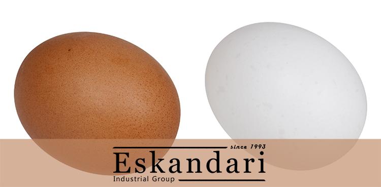 روند تشکیل تخم مرغ