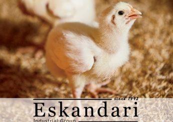 سالن پرورش مرغ