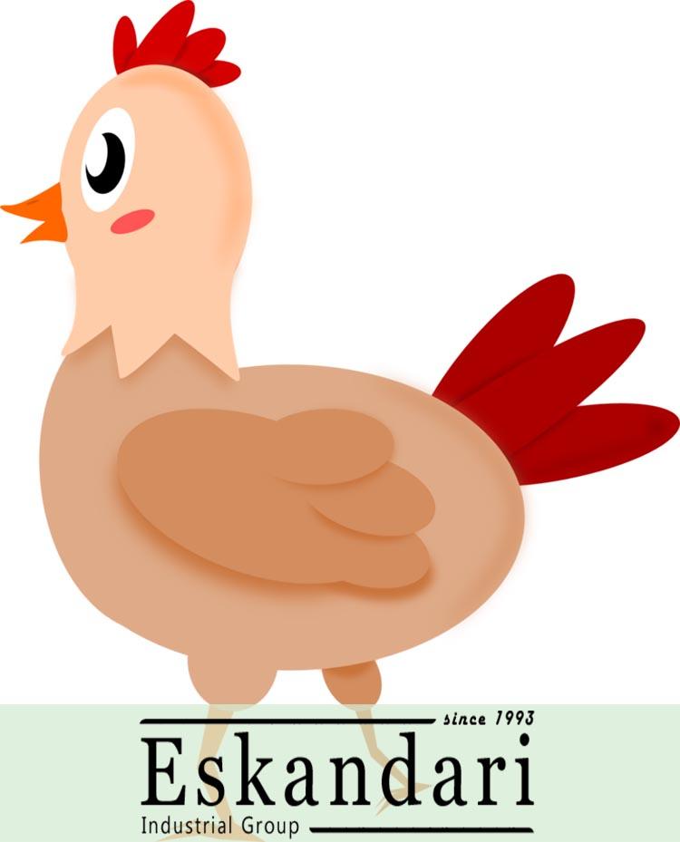 اصول پرورش مرغ