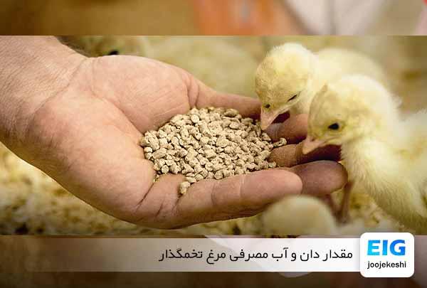 مصرف آب و خوراک مرغ بومی - جوجه کشی دات کام