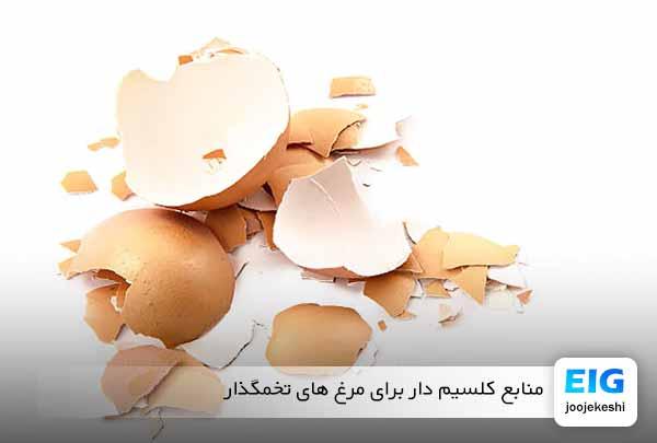 غذای کلسیم برای مرغ خانگی تخمگذار - جوجه کشی دات کام