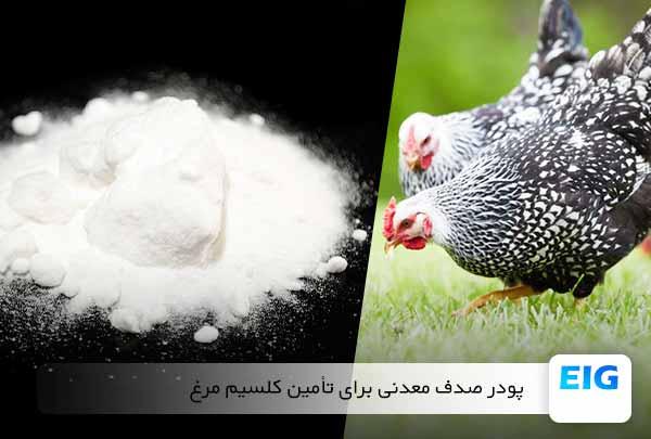 استفاده از صدف معدنی و پودر صدف برای مرغ تخمگذار - جوجه کشی دات کام