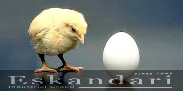 مراحل رشد جنین تخم مرغ