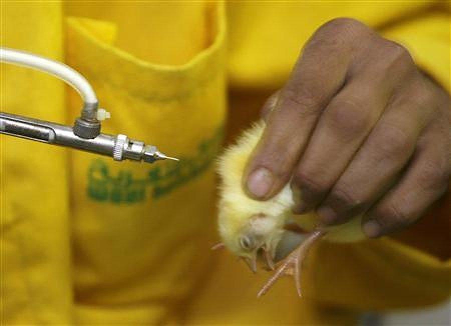 واکسن برونشیت عفونی مرغ