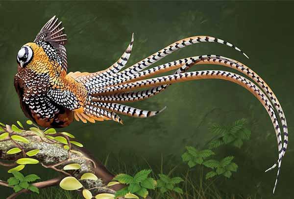 پرنده قرقاول - جوجه کشی دات کام