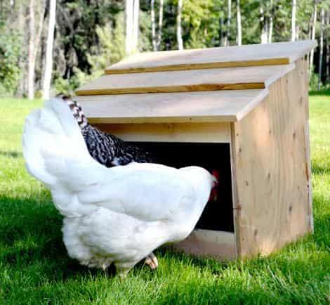 ساخت آشیانه برای مرغ بومی