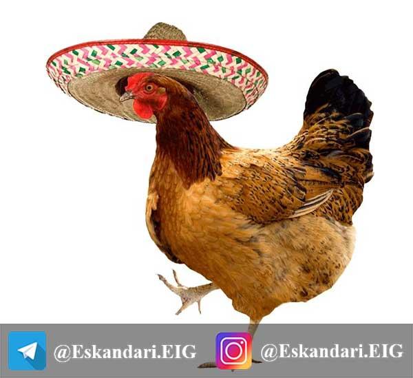 مرغ مکزیکی