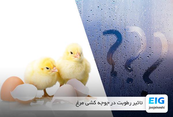 رطوبت لازم برای جوجه کشی مرغ - سایت جوجه کشی دات کام