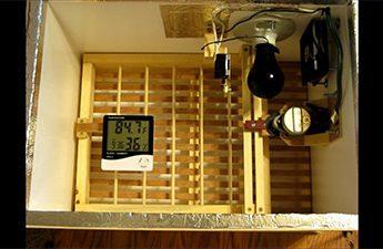 ساخت دستگاه جوجه کشی اتوماتیک در خانه