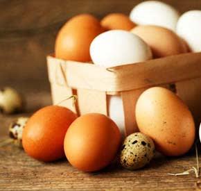 eggs for incubator