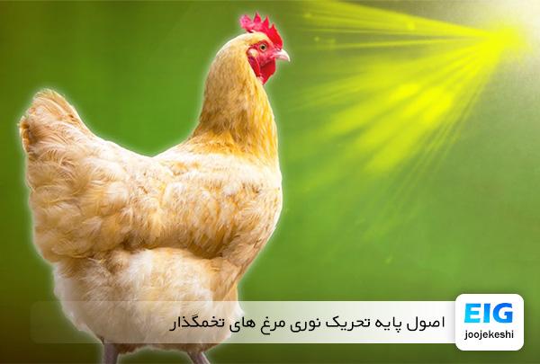 برنامه تحریک نوری مرغ تخمگذار - سایت جوجه کشی دات کام