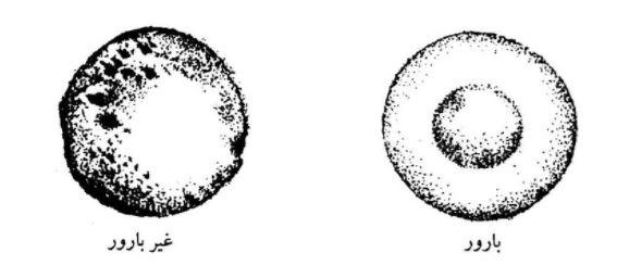 شکل شماتیک صفحهٔ رویانی بارور و غیر بارور