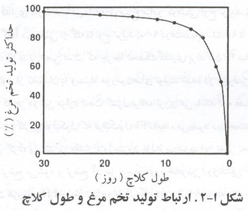 نمودار تولید مرغ و طول کلاچ