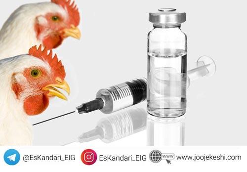 انواع واکسن ها در محیط کشت