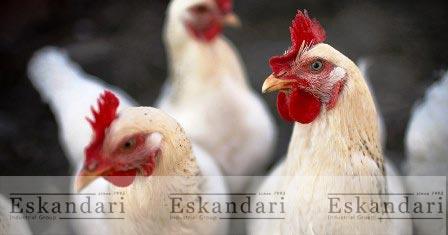 ایمنی زیستی پرندگان