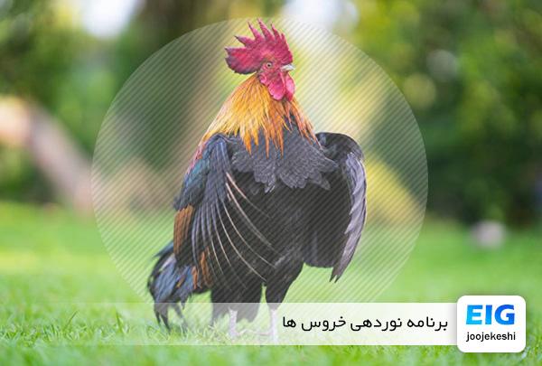 مدیریت برنامه نوری خروس ها - سایت جوجه کشی دات کام