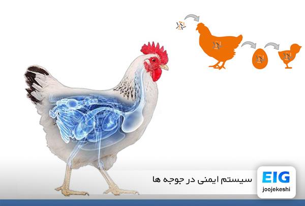 سیستم ایمنی در پرندگان و جوجه ها - جوجه کشی دات کام