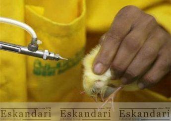 سیستم ایمنی در پرندگان