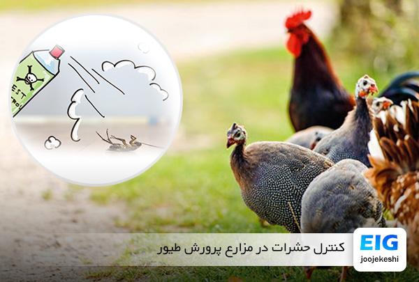 از بین بردن کنه ، شپش و حشرات بدن پرندگان - سایت جوجه کشی دات کام