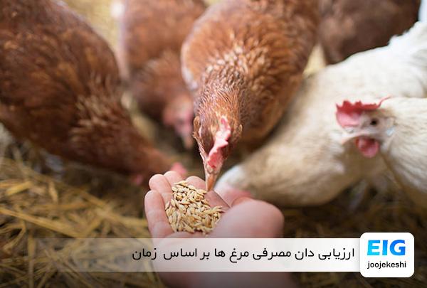 دان مصرفی مرغ و خروس بر اساس مدت زمان - سایت جوجه کشی دات کام