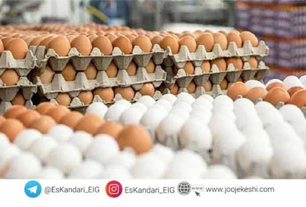 تأثیر تغذیه بر تخمگذاری مرغ - سایت جوجه کشی دات کام
