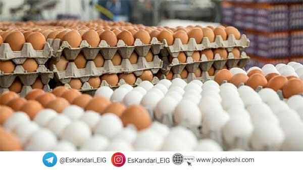 کاهش تولید تخم مرغ