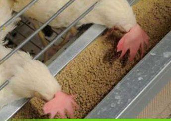 میزان مصرف جیره غذایی