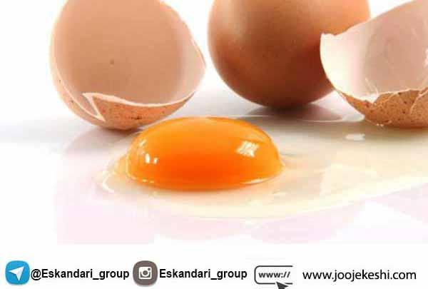 تشخیص کیفیت تخم مرغ - جوجه کشی دات کام