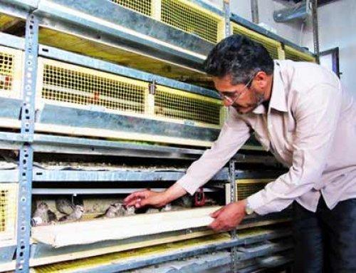ساخت دستگاه جوجه کشی با بدنه یخچال – اقتصاد مقاومتی