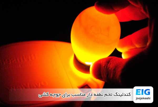کندلینگ تخم نطفه دار مناسب برای جوجه کشی - جوجه کشی دات کام