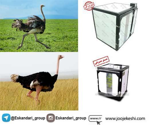 دستگاه جوجه کشی شتر مرغ