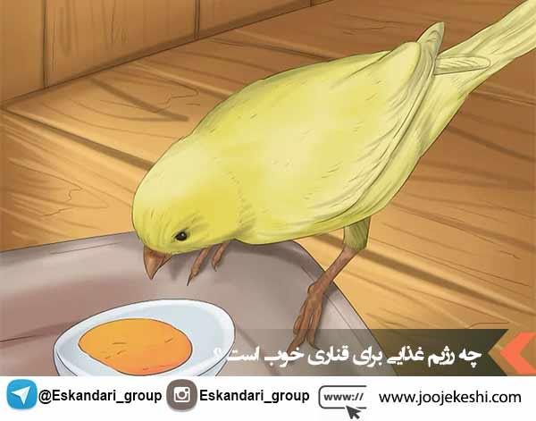 رژیم غذایی مناسب برای یک قناری خوب