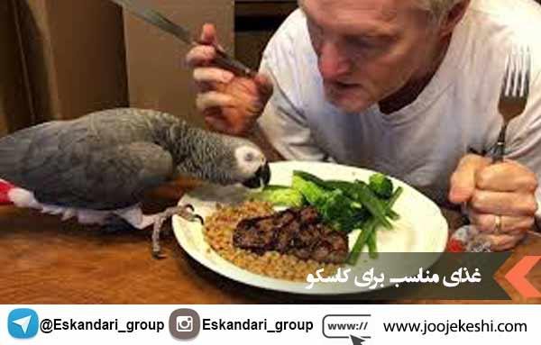 غذای مناسب برای کاسکو