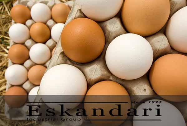 تولید تخم مرع دو زرده - جوجه کشی دات کام