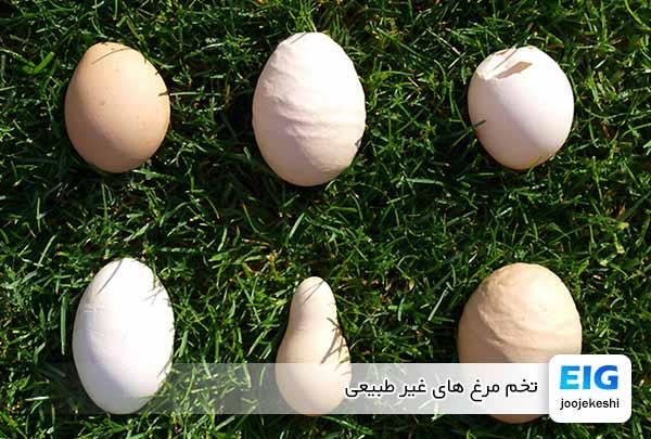 تخم مرغ های غیر طبیعی - جوجه کشی دات کام