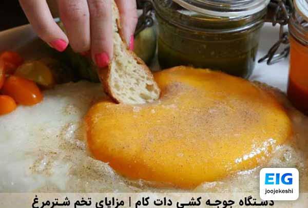 فواید خوردن تخم شترمرغ - جوجه کشی دات کام