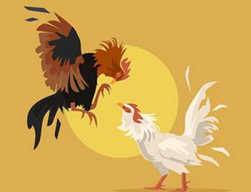 همه چیز درباره ی خروس لاری | پرورش ، تغذیه ، جوجه کشی
