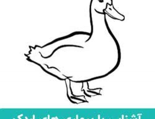 بیماری اردک | آشنایی با بیماری ها و درمان آنها