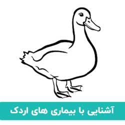 آشنایی با بیماری اردک
