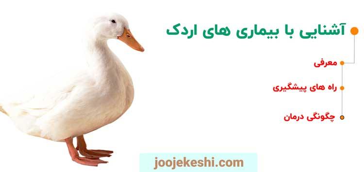 بیماری اردک