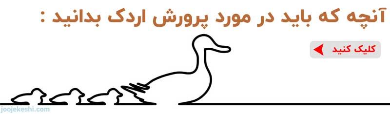 پرورش و نگهداری از اردک