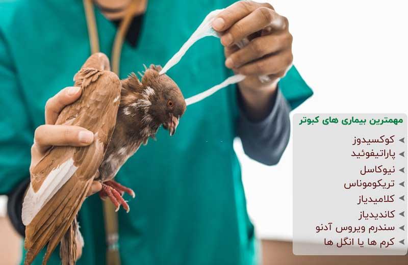 بیماری های مختلف کبوتر خانگی