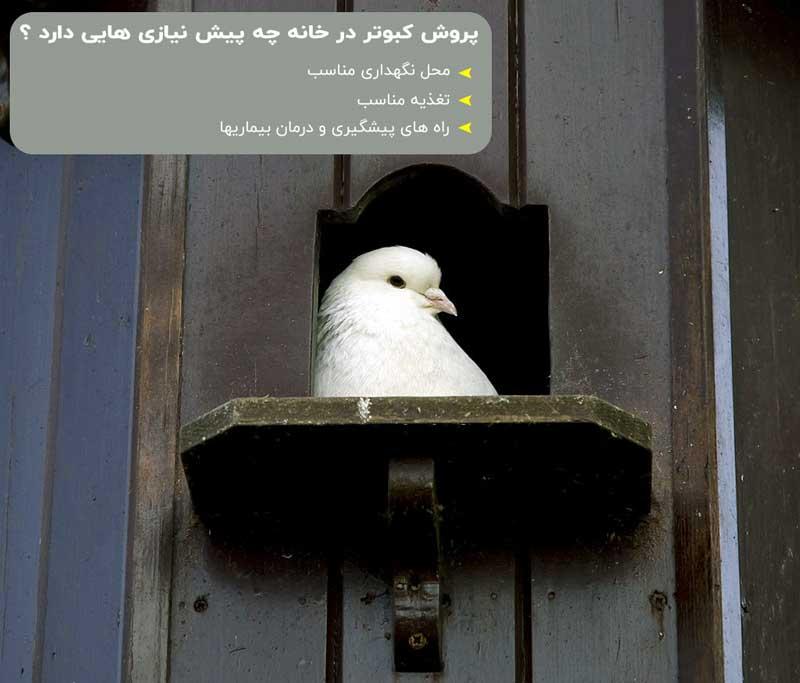 محل های نگهداری از کبوتر در خانه