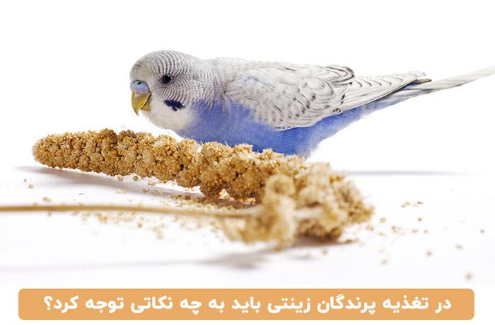 اصول تغذیه در پرندگان زینتی