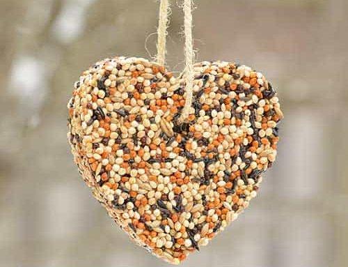 بهترین تغذیه برای پرندگان زینتی و خانگی چیست ؟