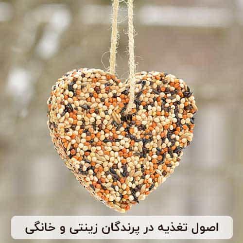 تغذیه در پرندگان زینتی