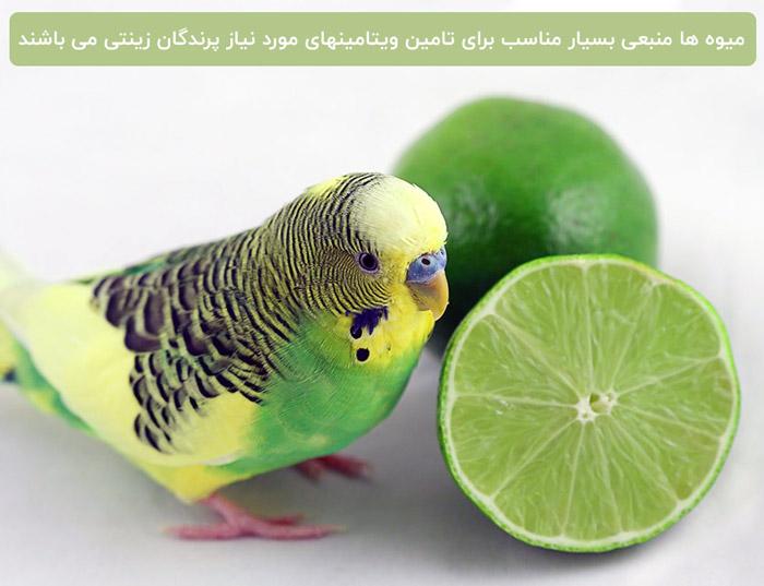 میوه برای پرندگان