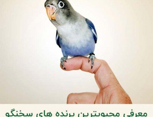 معرفی پرندگان سخنگو | آشنایی با محبوبترین پرندگان سخنگو در جهان