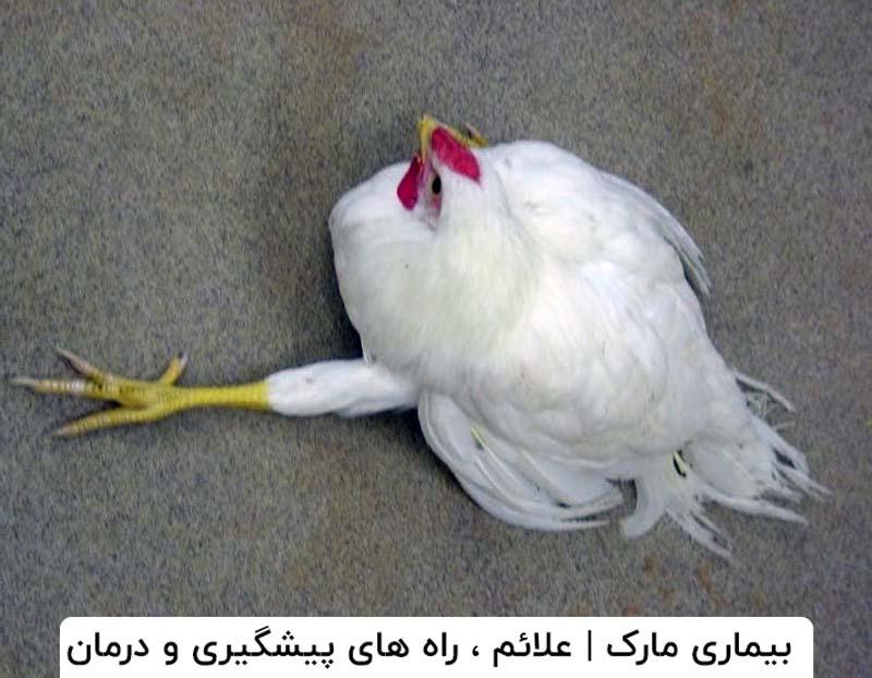 بیماری مارک در پرندگان